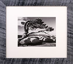 Framed Ansel Adams Jeffrey Pine, Sentinel Dome 1940