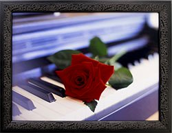Framed Red Rose on Piano Photographic print.